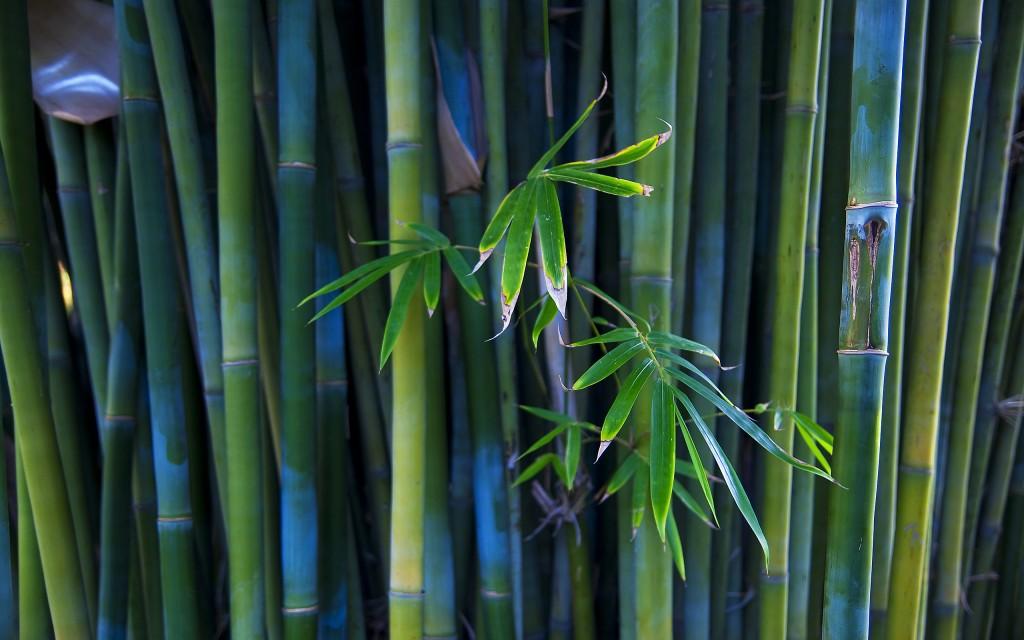 bambou vert bleu